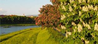 Квітуче Закарпатті. Долина нарцисів, крокуси і сакура