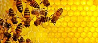 Żyjący region Charków. Pszczoła i miód