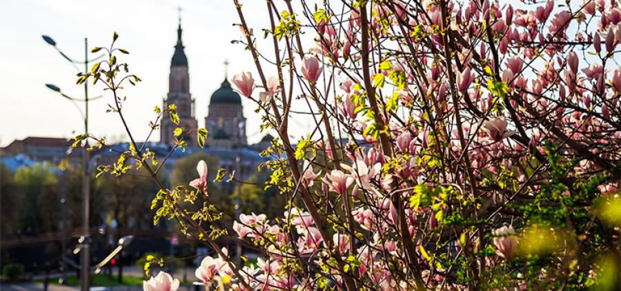 Green designer. Gardens and squares of Kharkov